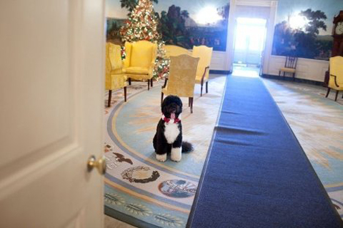 The Blue Room is the formal reception room of the White House.