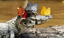 Chuyện 2 con cá sấu và sức mạnh thần kỳ của việc… không làm gì cả