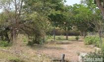 Bất động sản 24h: Giá đất Cần Giờ lại 'leo thang' không tưởng