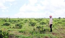 Tái phân bổ đất nông, lâm trường: Vì sao vẫn dè dặt?