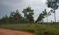 Đắk Lắk: 1.700 ha đất rừng bốc hơi sạch trong vòng 10 năm
