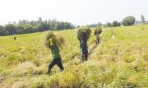"""Thị trường """"ngầm"""" quyền sử dụng đất nông nghiệp đang """"nổi"""""""