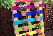 Sân vườn đầy màu sắc chào đón mùa hè