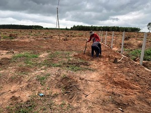 Ảnh chụp thực tế tại dự án khu trang trại và nghỉ dưỡng Farmstay G7