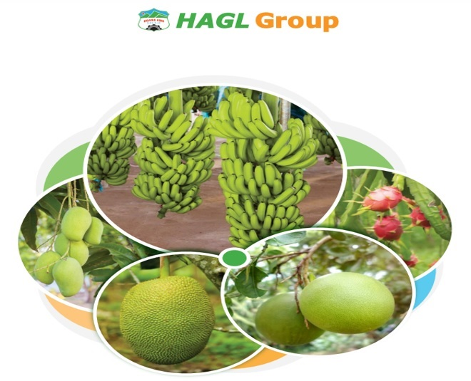 HAGL bán bớt tài sản để cấu trúc tài chính? HAGL bán bớt tài sản để cấu trúc tài chính? haglt 1566043816