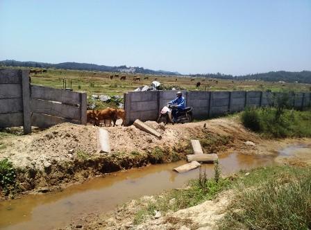 Dự án treo, bịt cả lối đi của dân và thành nơi chăn thả bò