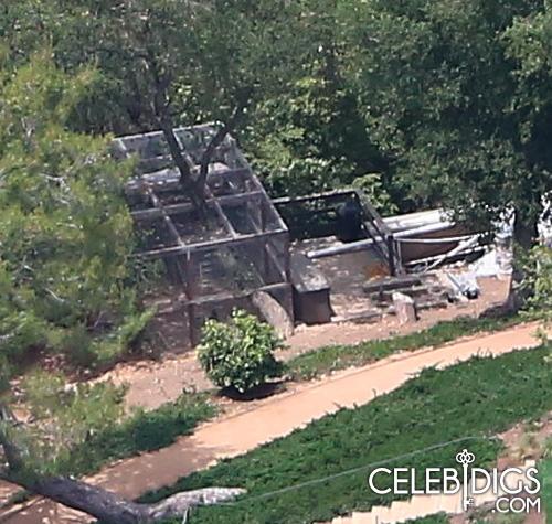 Không mấy khi các ngôi sao Hollywood thích chăn nuôi gà trong biệt thự sang trọng của họ.