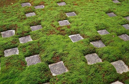 Đẹp lạ lùng vườn Nhật đúng chất - 7