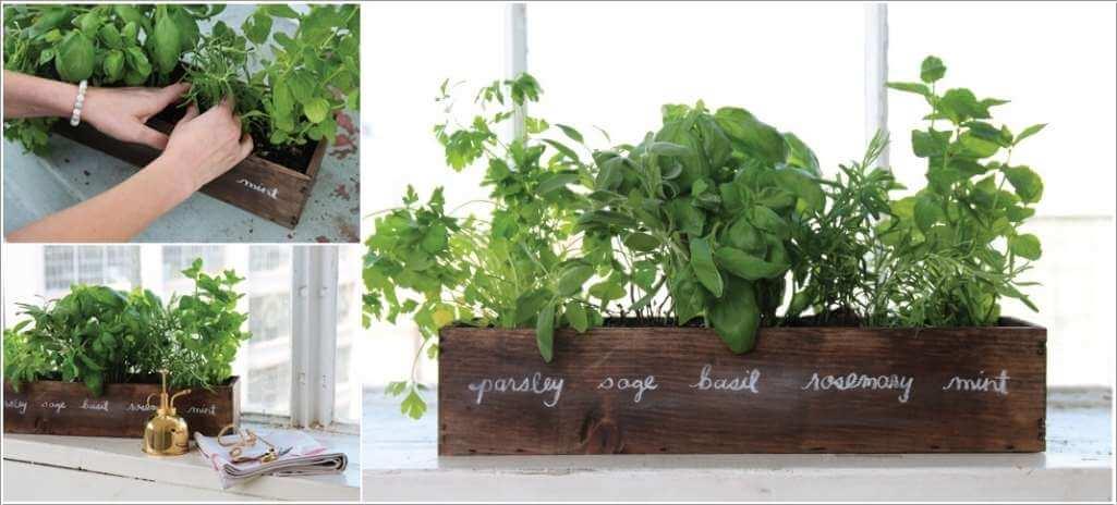 Ý tưởng trồng cây thảo mộc trong nhà