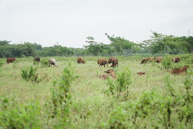 Nguồn cung đất nền TP.HCM sụt giảm mạnh