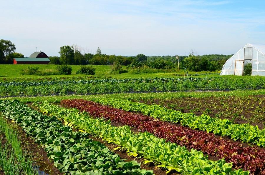 Vừa đầu tư nghỉ dưỡng vừa kiếm tiền từ farmstay G7 - CafeLand.Vn