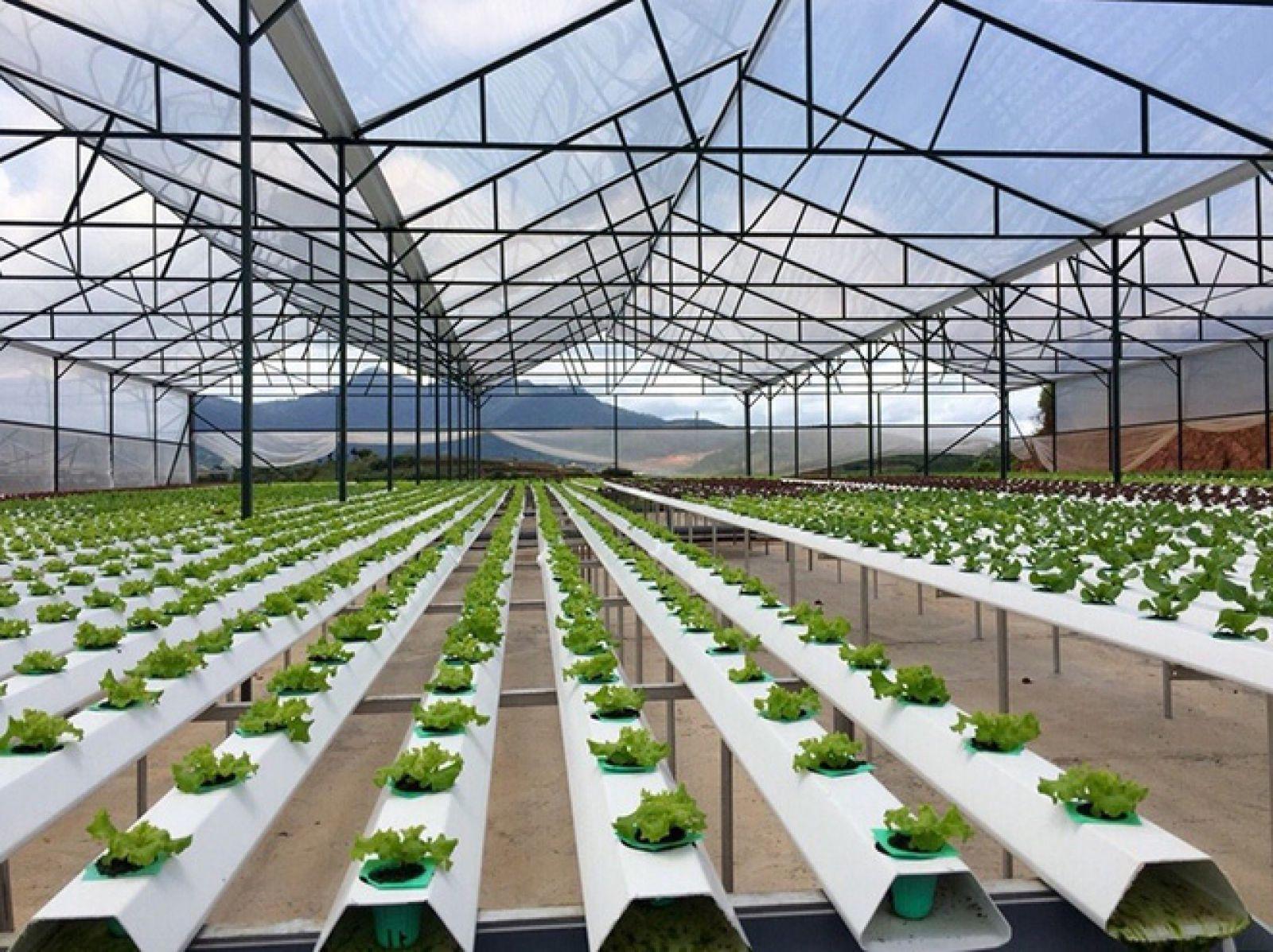 Đề xuất xây dựng khu nông nghiệp năng lượng xanh thông minh 2.500ha tại Thanh Hoá