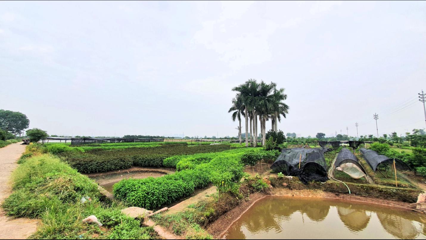 Hà Nội: Siêu dự án trọng điểm Habiotech treo 13 năm
