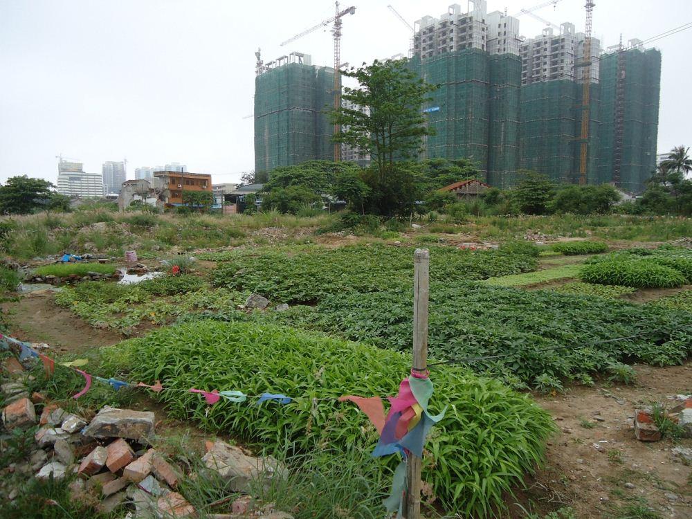 hinh minh hoa 1481205084 Đất nông nghiệp kết hợp với nhà ở kinh tế vườn là như thế nào?