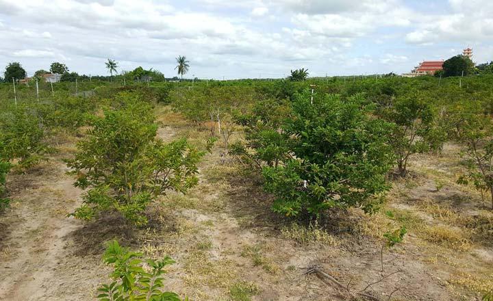 Thủ tục chuyển đổi đất nông nghiệp sang đất thổ cư