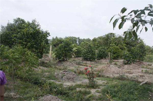 Chuyển mục đích sử dụng đất trồng cây sang đất ở