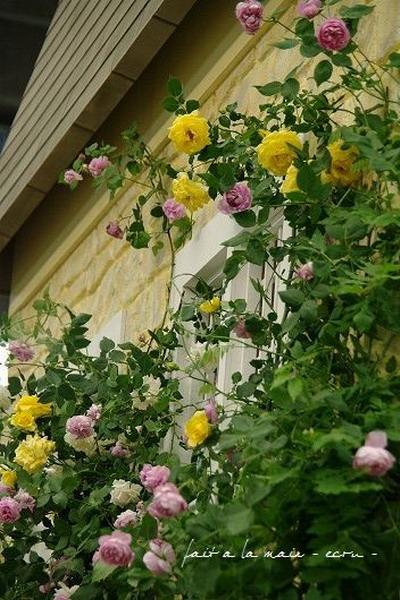 Hoa hồng điểm tô nhà vườn thêm lãng mạn - Archi