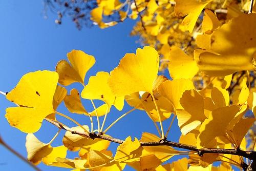 Những loại cây có khả năng bảo vệ và mang lại may mắn