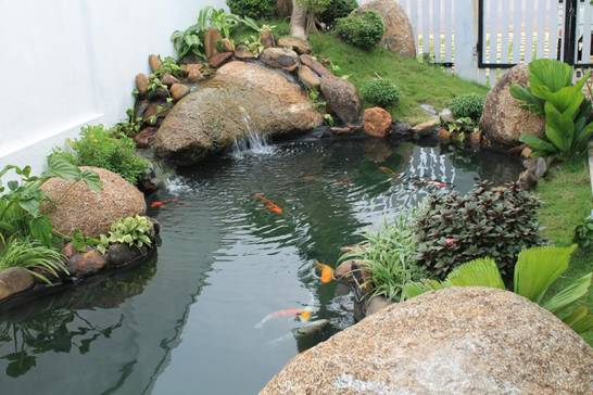 111443baoxaydung image001 1428079398 Chọn hình dáng và phương vị cho hồ nước trong sân vườn