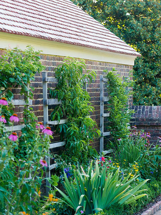 Những ý tưởng tuyệt vời cho sân vườn nhỏ