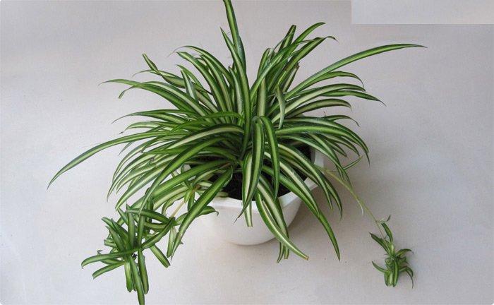 7 loại cây trồng trong nhà giúp thanh lọc không khí