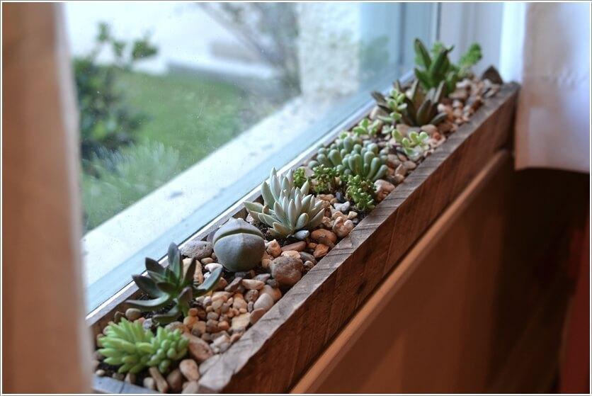 Trang trí nhà với các loại sen đá