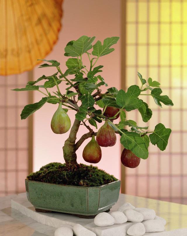 Trang trí sân vườn nhà đẹp với cây bonsai mini