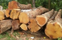 Ứng dụng của gỗ mít trong đời sống