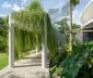 Ngôi nhà tươi mát nhờ cây xanh bao quanh