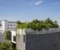 Ấn tượng với nhà có nhiều cây xanh giữa lòng Đà Nẵng