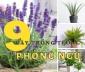 """9 loại cây trồng trong phòng ngủ có cơ chế sinh học """"ngược"""""""
