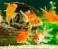 Hướng đặt bể cá cho người mệnh Mộc theo phong thủy