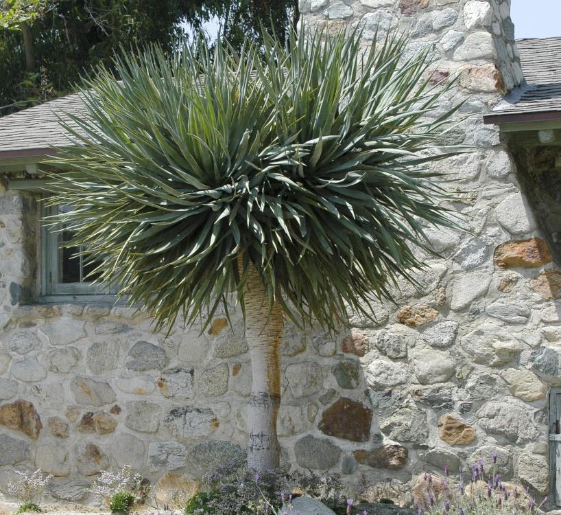 …Và cũng thân thuộc với hình ảnh cây đứng vững chãi, trường tồn ở trước sân nhà.