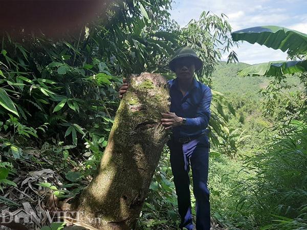 Phú Thọ: Tàn sát rừng phòng hộ và hơn 1.000ha rừng biến mất