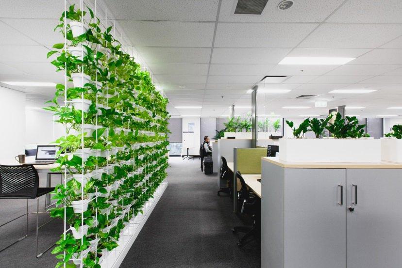 Treo tranh và tạo mảng xanh trong văn phòng