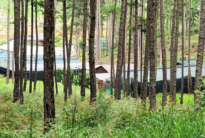 Ngang nhiên mở đường, dựng cả chục ngôi nhà trong rừng thông Đà Lạt