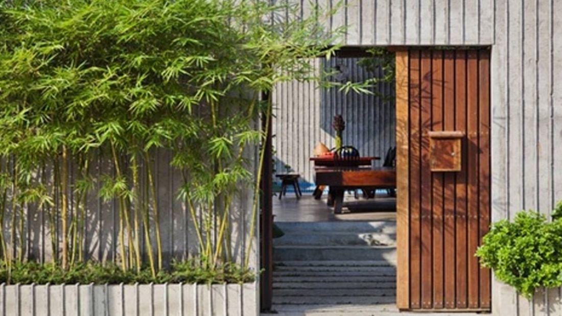 Nên trồng cây gì trước nhà theo phong thủy? - Ảnh 2