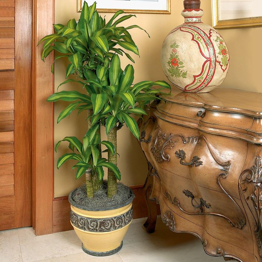 Nên trồng cây gì trước nhà theo phong thủy? - Ảnh 4