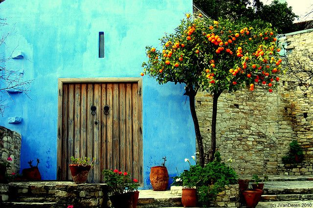 Nên trồng cây gì trước nhà theo phong thủy? - Ảnh 5