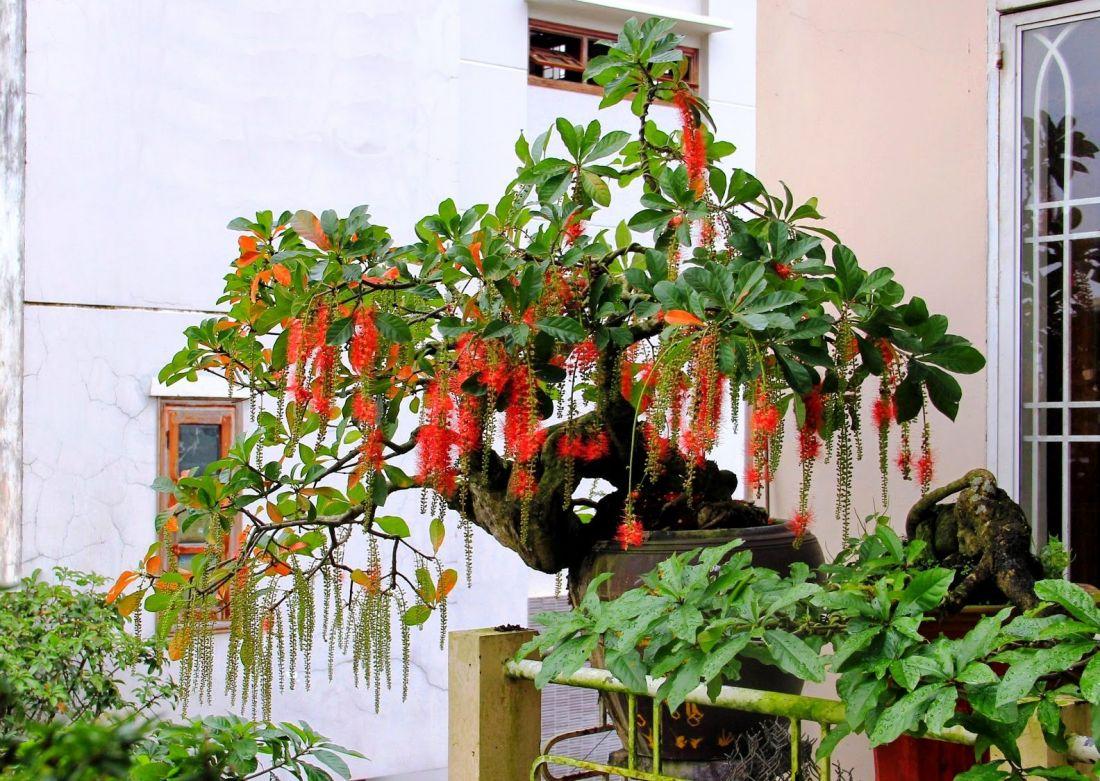 Nên trồng cây gì trước nhà theo phong thủy? - Ảnh 6