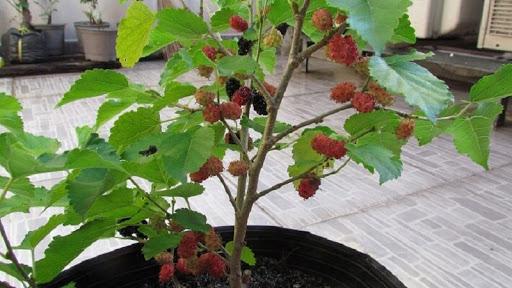 7 loại cây phạm phong thủy tránh trồng trong nhà