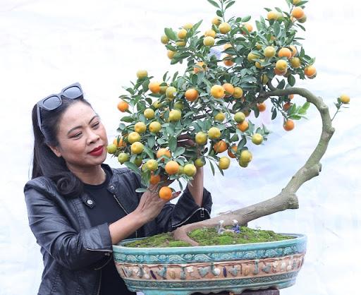 """Chậu quất bonsai có thân cây """"lượn sóng"""" độc đáo"""