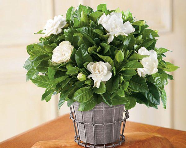 Những loại hoa không cắm trên bàn thờ