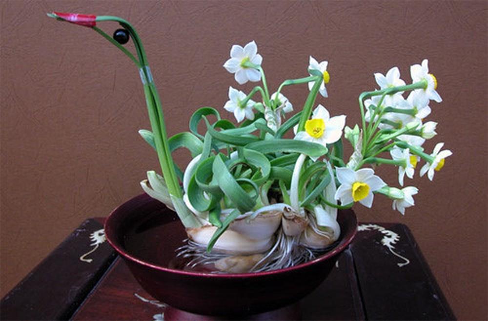 Cách chọn hoa trang trí phòng khách ngày tết