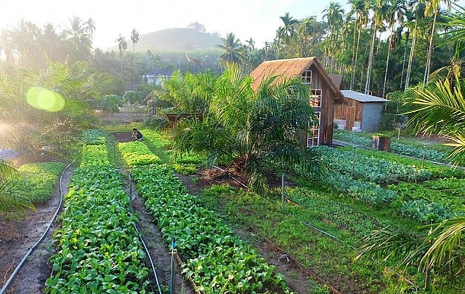 Đầu tư đất trang trại: xu hướng hay nhất thời?