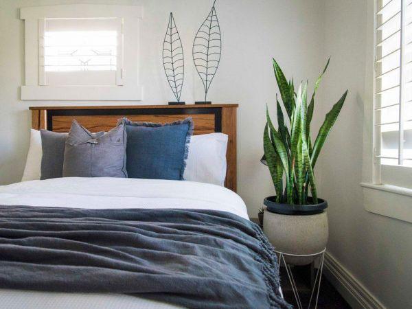 Lưu ý khi đặt cây trồng trong phòng ngủ