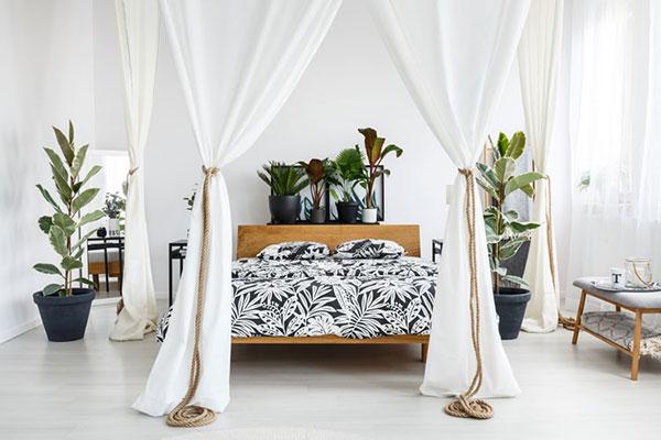 Nên trồng 3 - 4 chậu cây mini để bàn trong phòng ngủ