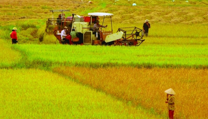 Coi chừng mất tiền khi mua đất lúa [NEW]