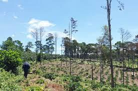 Lâm Đồng xử công ty lấn chiếm đất rừng 255 triệu đồng [NEW]