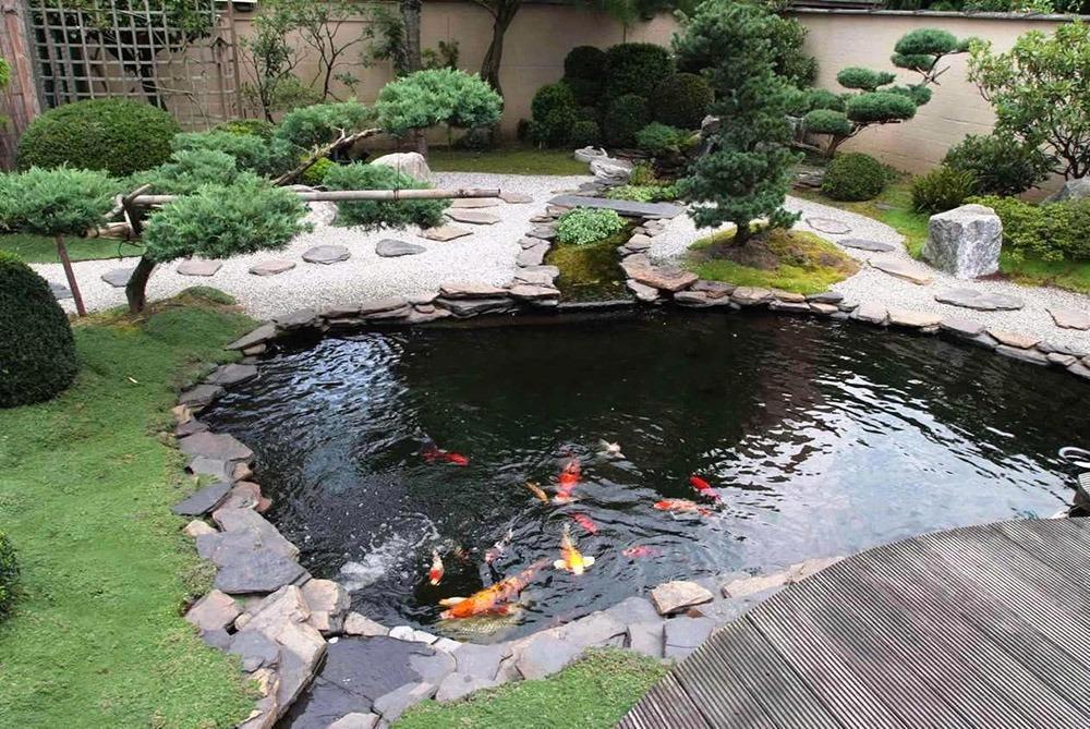 Ý tưởng thiết kế hồ cá Koi tạo không gian thư giãn ngoài trời